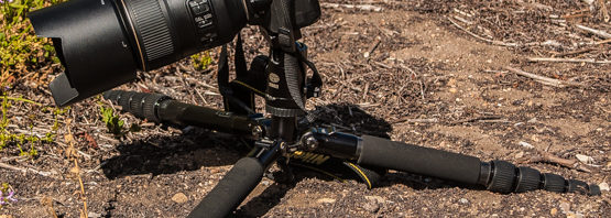 In search of the ideal tripod for plant photography