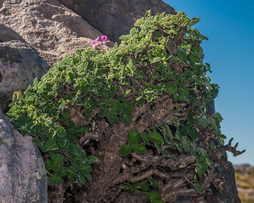 pelaechi-2011-07-13_dsc6082
